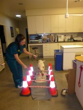 Canine Rehabilitation.  Pet physical therapy